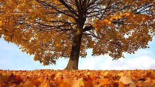 """Peaceful music, Relaxing music, Nature Instrumental music """"Golden Harvest"""" by Tim Janis"""