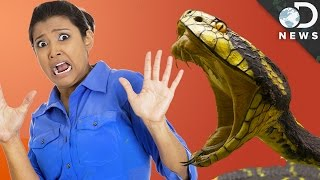 Why Is Everyone Afraid Of Snakes?