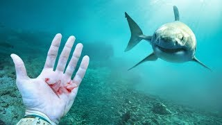O Que Acontece Se Você Sangrar Perto de um Tubarão?