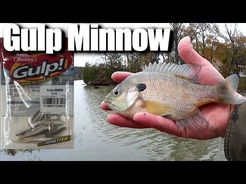 Cold Water Fishing From the Bank with GULP Minnows