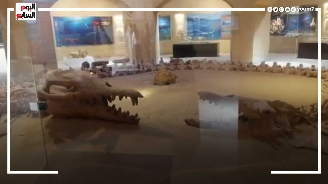 حيتان عمرها 40 مليون سنة بمحمية التراب الطبيعى العالمى فى الفيوم  - نشر قبل 1 ساعة