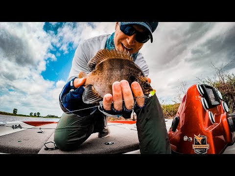 Fishing Bluegill Beds With Beetle Spin Lures
