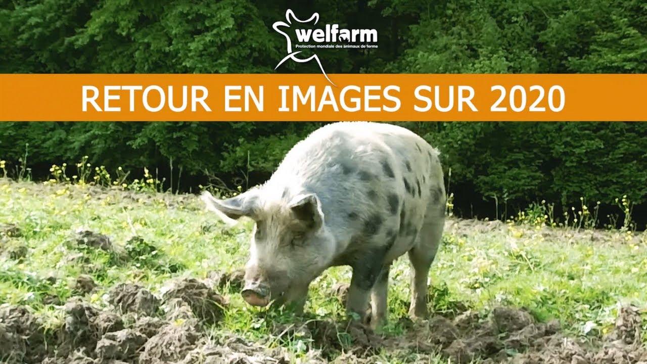 RÉTROSPECTIVE 2020 : nos actions menées pour le bien-être des animaux d'élevage