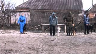 """Дрессировка собак. Площадка """"Времена года"""". Кривой Рог."""