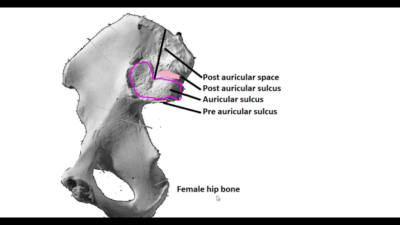 With hips male female Male Vs.