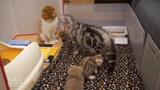 Реакция котят на папу которого увидели в первый раз).