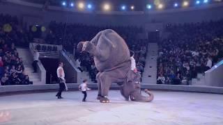 Тульский цирк