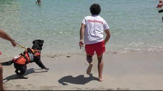 BAUWATCH I cani bagnino in azione sulla spiaggia di Mondello