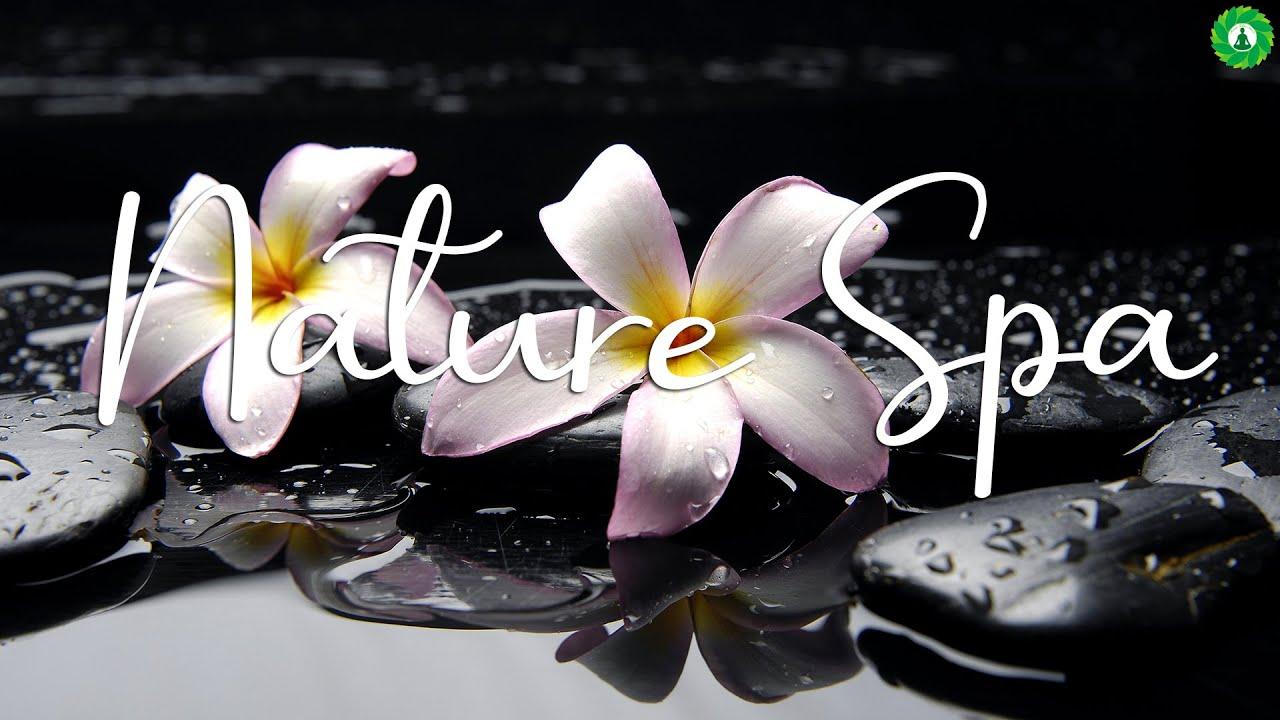 [4K Piano Music] 최고의 피아노 플레이리스트와 자연 스파와 함께하는 휴식 🌸 'Healing With Nature Spa'