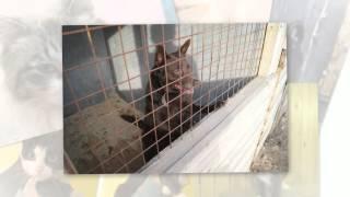Видеоальбом о приюте бездомных животных г. Иваново. Создан Am-album.com