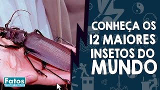 Gambar cover Conheça os 12 maiores insetos do mundo.