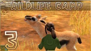 limping gazelles little lost zebra foal wildlife camp episode 3