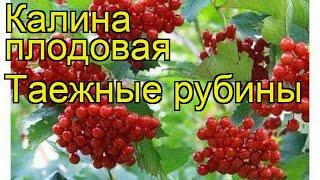 видео Калина Жолобовская