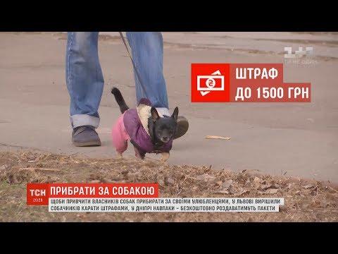 ТСН: Штрафи та безкоштовні пакети: активісти намагаються привчити українців прибирати після своїх собак