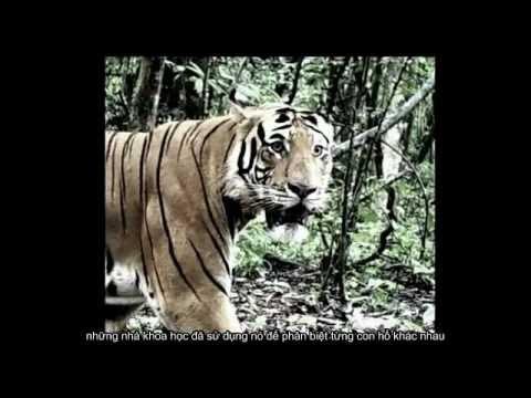 Săn đuổi kẻ giết hổ