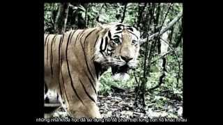Repeat youtube video Săn đuổi kẻ giết hổ
