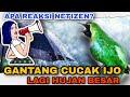 Lomba Cucak Ijo Hujan Hujan Apa Reaksi Peserta  Mp3 - Mp4 Download