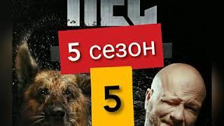 Сериал Пес 5 сезон 5 серия