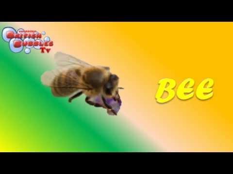 Los Insectos En Ingles Para Niños Vídeo En Inglés De Los Animales Bbtv46