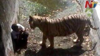 White Tiger Attack and Kills Student in Delhi Zoo