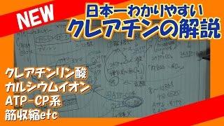 日本一わかりやすいクレアチンの解説!【クレアチンリン酸・ATP-CP系・筋収縮etc】