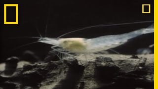 Bizarre Blind Cave Creatures | National Geographic