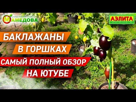 Вопрос: Можно ли вырастить помидоры, перец и баклажаны на балконе в горшках?