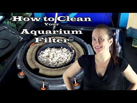 How to Clean your Aquarium Filter
