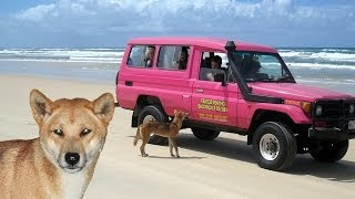 Fraser Island Tagalong Tour Thumbnail