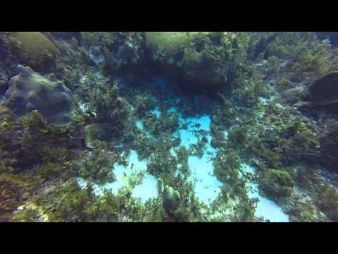 First Dive in Montego Bay Jamaica