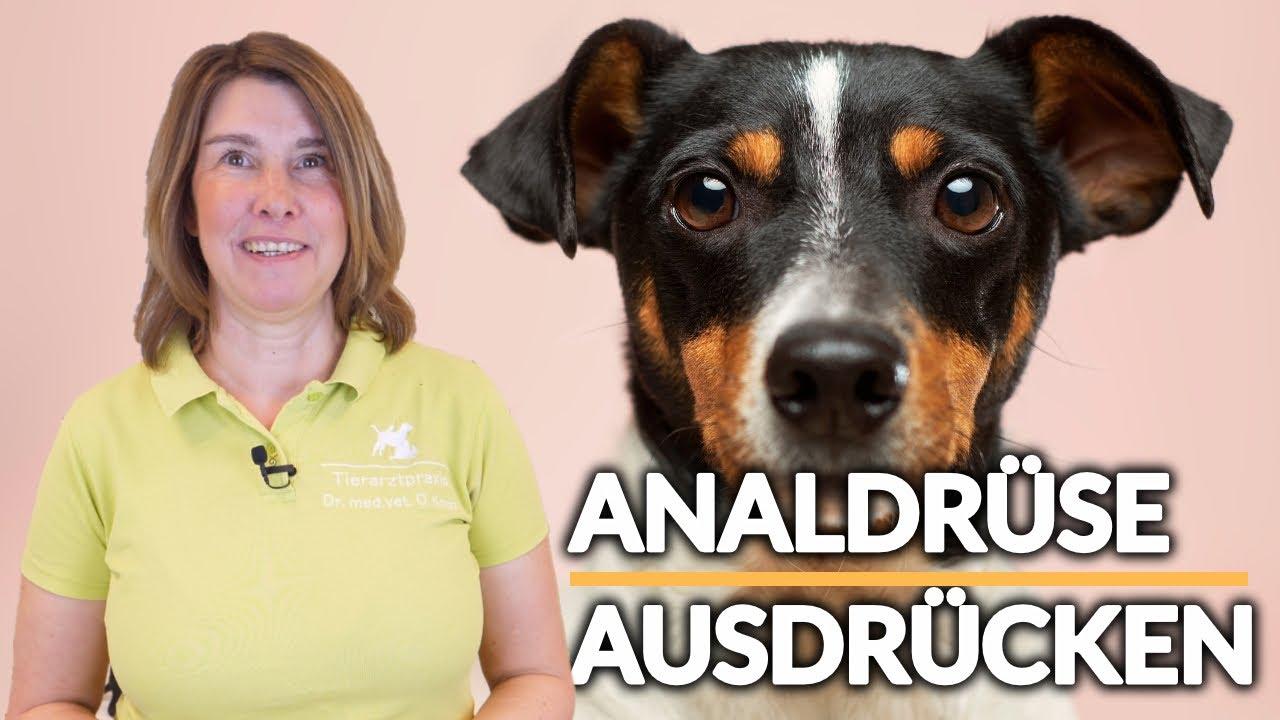 Analdruse Hund Katze Ausdrucken Mit Dr Med Vet C Koch Wgw 3 Youtube