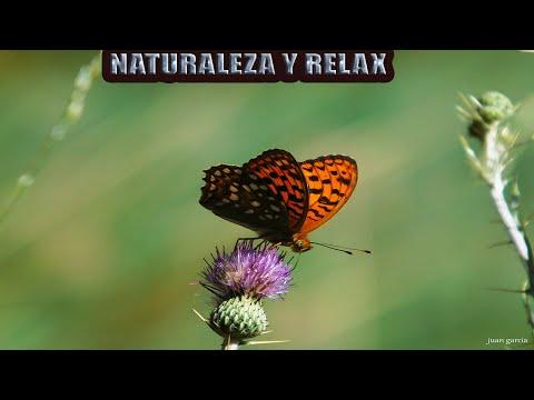 naturaleza-sonidos-y-mariposas