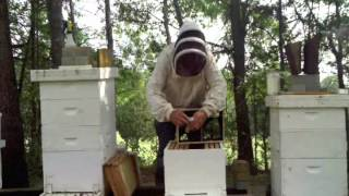 Installing A New Package Of BEES