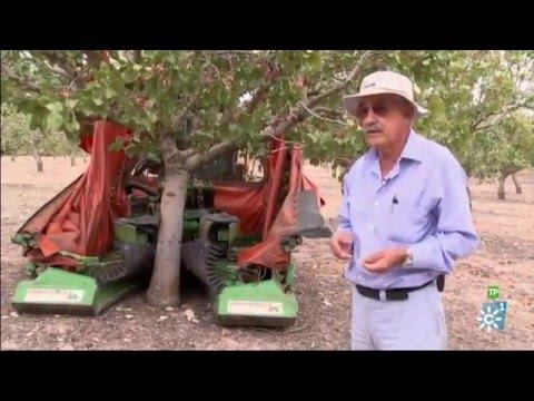 Campechanos | José Aguilar, pionero de los pistachos. Dolores Cervilla, agricultora y ganadera