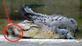 When Crocodiles Attack