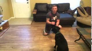 Training Your Dog / Hunting Dog Hand Directions Left And Right Blind Retrieve