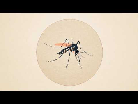 Using Nuclear Science to Control Mosquitoes