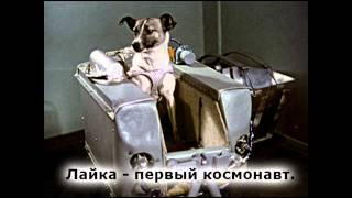 Лайка - первый космонавт