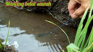 Nyobain spot baru mancing belut di sawah air tawar