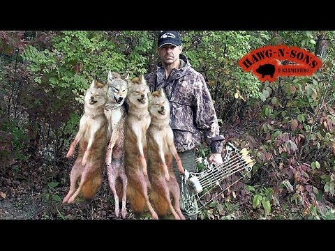 How to Make the Best Bow Shot to Kill a Deer