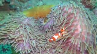 Scuba diving Bangka Island, North Sulawesi, Indonesia