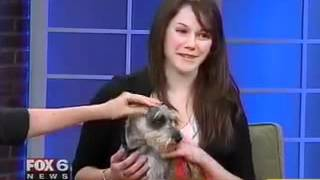 Amelia The 4-year-old Miniature Schnauzer On Fox6 Wakeup News