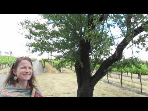 Capay Valley Organic Farm and Vineyards