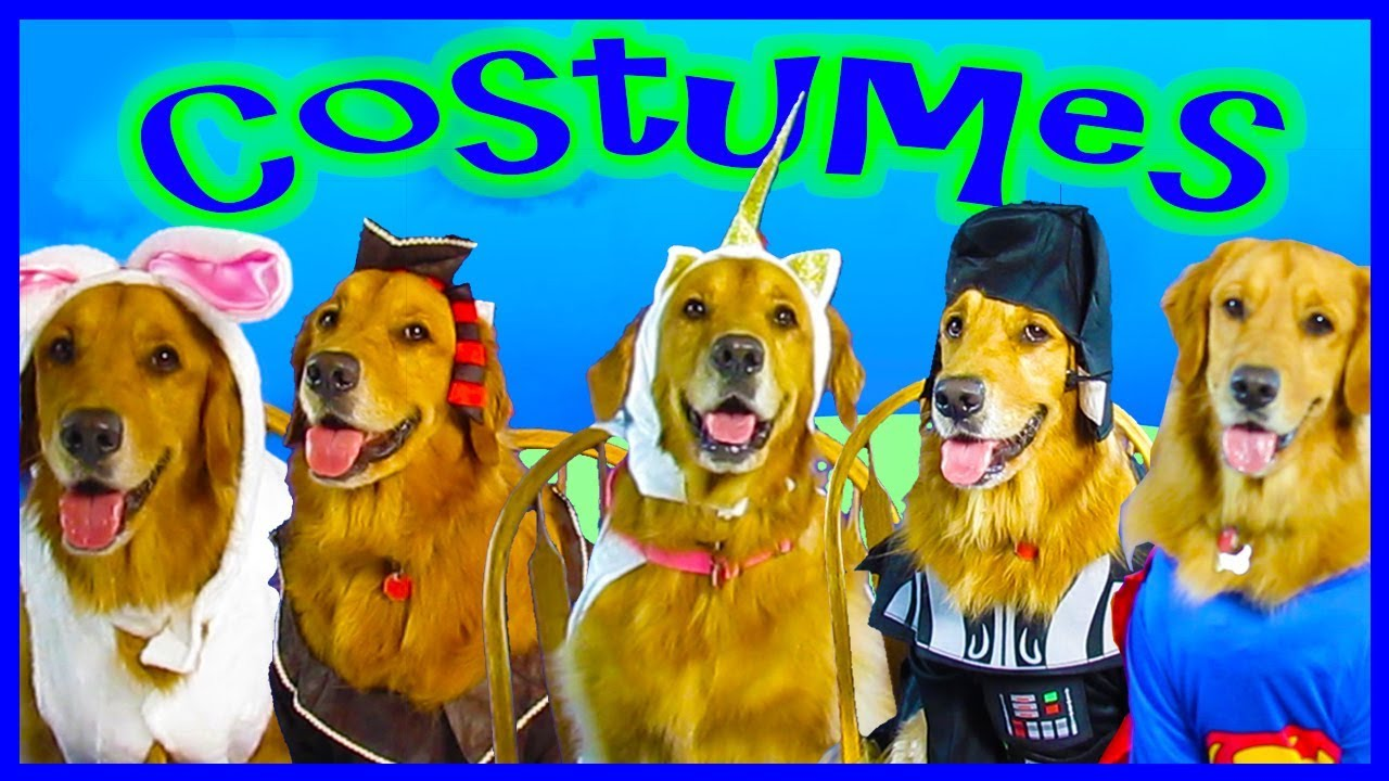 halloween dog costumes!!! from rubie's pet shop boutique with my