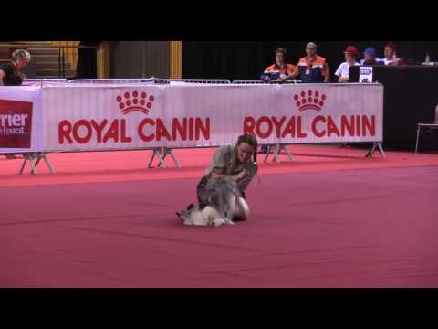 GPF Dog Dancing 2016 Cheyenne Avancé Free