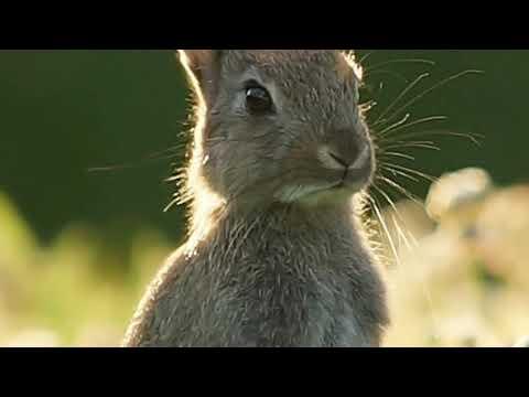 Интересные факты о зайцах.