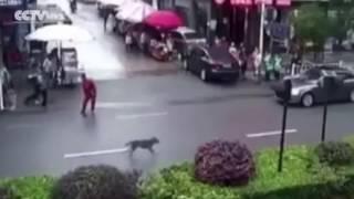 Chó điên lao vào cắn hơn 20 người giữa phố