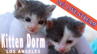 Livestream Kitten Dorm Cam from LA