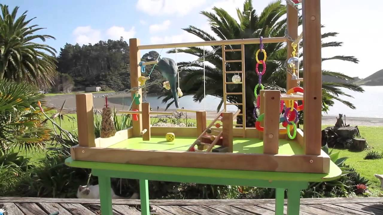 Awesome parrot playgym youtube for How to build a bird stand