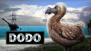 Lo que no conocías de un Dodo